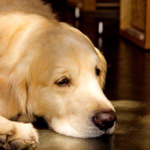 犬にとって意味のない夏対策